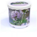 Wholesale - Pelargonium Graveolens DIY Green Plant