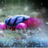 Wholesale - Cute & Novel Turtle Plush Toy LED Starry Night Projector LED Night Light